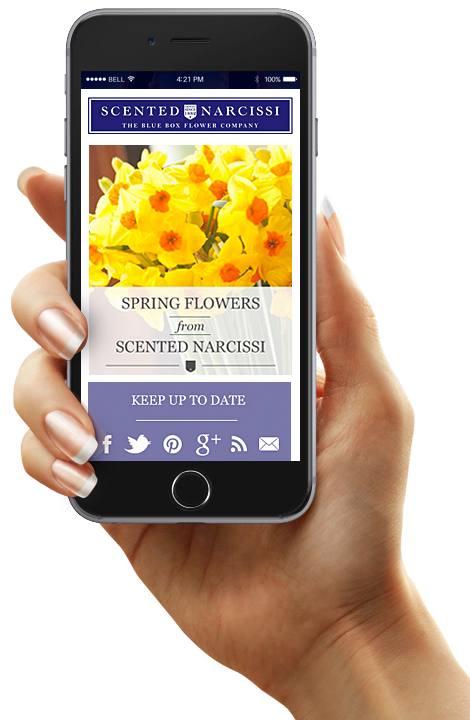 Scented Narcissi email campaign